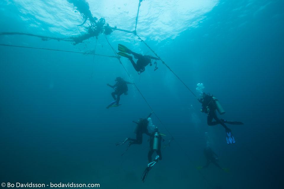 BD-151228-Oslob-1369-Homo-sapiens.-Linnaeus.-1758-[Diver].jpg